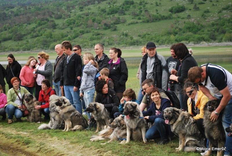 Dan s kraškimi ovčarji v domovini kraševca