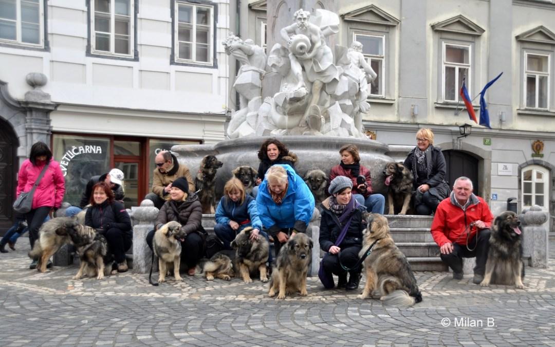 Druženje na mesečnih DLVKOS srečanjih v Ljubljani 25.1.2015