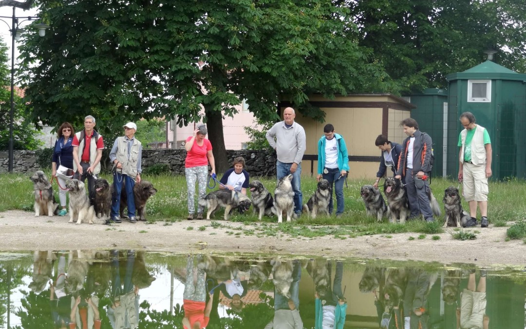 Srečanje kraških ovčarjev v Bazovici 2018